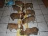 2010-01-03 - A-Wurf, 38.Tag - 3