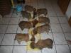2010-01-03 - A-Wurf, 38.Tag - 4
