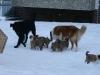 2010-01-04 - A-Wurf Gini & Belana, 39.Tag - 11