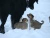 2010-01-04 - A-Wurf Gini & Belana, 39.Tag - 15