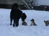 2010-01-04 - A-Wurf Gini & Belana, 39.Tag - 16