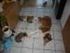 2010-01-04 - A-Wurf Gini & Belana, 39.Tag - 4