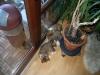 2010-01-04 - A-Wurf Gini & Belana, 39.Tag - 6