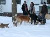 2010-01-04 - A-Wurf Gini & Belana, 39.Tag - 8