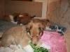 2010-01-06 - A-Wurf, 41. Tag - 14