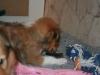 2010-01-06 - A-Wurf, 41. Tag - 15