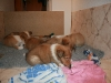 2010-01-06 - A-Wurf, 41. Tag - 17