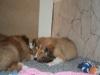 2010-01-06 - A-Wurf, 41. Tag - 18