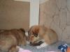 2010-01-06 - A-Wurf, 41. Tag - 19