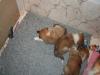 2010-01-06 - A-Wurf, 41. Tag - 20