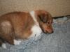 2010-01-06 - A-Wurf, 41. Tag - 26