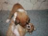 2010-01-06 - A-Wurf, 41. Tag - 37
