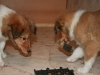 2010-01-06 - A-Wurf, 41. Tag - 6