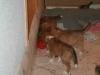 2010-01-09 - A-Wurf, 44.Tag - 1