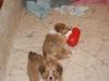 2010-01-09 - A-Wurf, 44.Tag - 18
