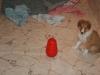2010-01-09 - A-Wurf, 44.Tag - 22