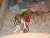 2010-01-09 - A-Wurf, 44.Tag - 24
