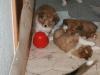 2010-01-09 - A-Wurf, 44.Tag - 3