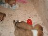 2010-01-09 - A-Wurf, 44.Tag - 33