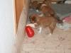 2010-01-09 - A-Wurf, 44.Tag - 5