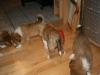 2010-01-09 - A-Wurf, 44.Tag - 59