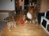2010-01-09 - A-Wurf, 44.Tag - 81