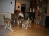 2010-01-09 - A-Wurf, 44.Tag - 87