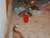 2010-01-09 - A-Wurf, 44.Tag - 9