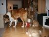 2010-01-09 - A-Wurf, 44.Tag - 90