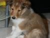 2010-01-10 - A-Wurf, 45.Tag - 23