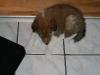 2010-01-10 - A-Wurf, 45.Tag - 44