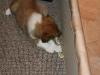 2010-01-10 - A-Wurf, 45.Tag - 51