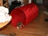 2010-01-10 - A-Wurf, 45.Tag - 66