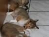 2010-01-12 - A-Wurf, 47.Tag - 12