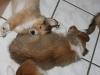 2010-01-12 - A-Wurf, 47.Tag - 16
