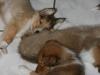 2010-01-12 - A-Wurf, 47.Tag - 17