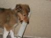 2010-01-12 - A-Wurf, 47.Tag - 20