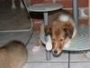 2010-01-12 - A-Wurf, 47.Tag - 25