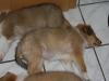 2010-01-12 - A-Wurf, 47.Tag - 3