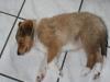 2010-01-12 - A-Wurf, 47.Tag - 5