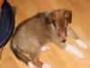 2010-01-12 - A-Wurf, 47.Tag - 55