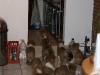 2010-01-12 - A-Wurf, 47.Tag - 70