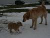 2010-01-27 - A-Wurf, 62.Tag - 7