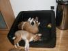 2010-02-04 - A-Wurf 9.Woche - 1