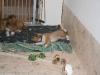 2010-02-04 - A-Wurf 9.Woche - 12