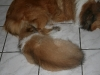 2010-02-04 - A-Wurf 9.Woche - 16