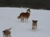 2010-02-14 Schneespaziergang - 10