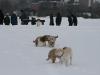 2010-02-14 Schneespaziergang - 112