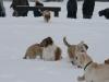 2010-02-14 Schneespaziergang - 113
