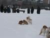 2010-02-14 Schneespaziergang - 117